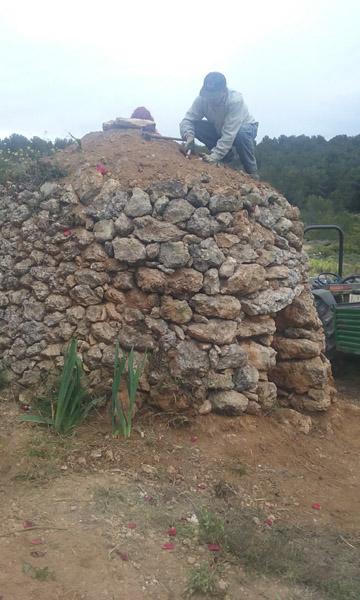 Els lliris en el moment de ser plantats al sostre de la cabana, quin goig que fa ara.